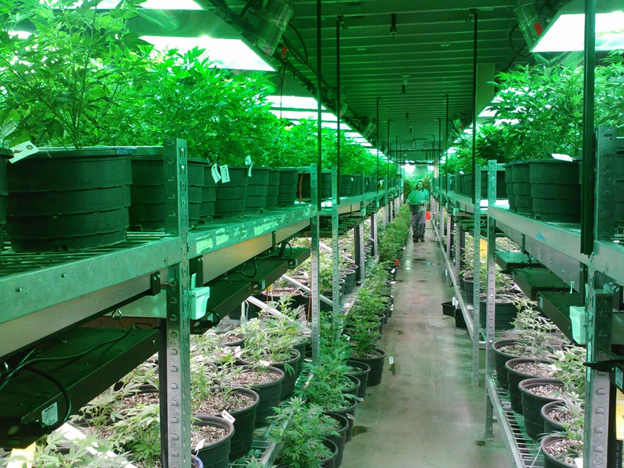 Security Systems for a Cannabis Industry