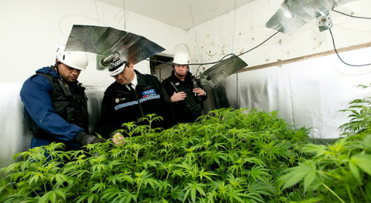 Downsides Of Not Securing Your Cannabis Factory